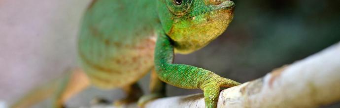 Madagascar ©Fabio Blanco