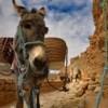 Reportage tra i Berberi