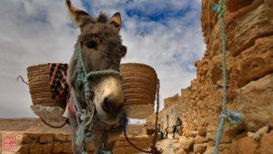 Foto di operai al lavoro realizzata un al workshop fotografia in Tunisia