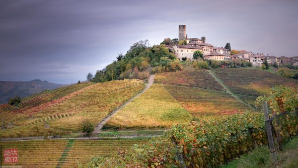 Scorcio delle vigne Piemontesi